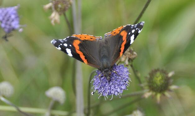 van rups tot vlinder
