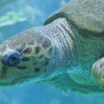 zeeschildpadden