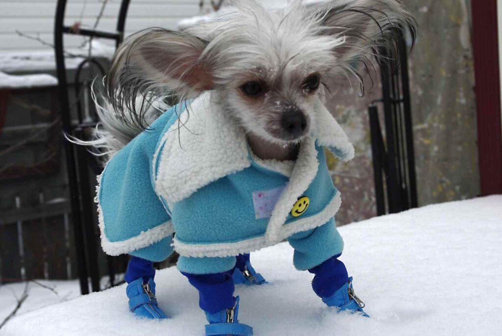 Overwinteren- aangekleed hondje