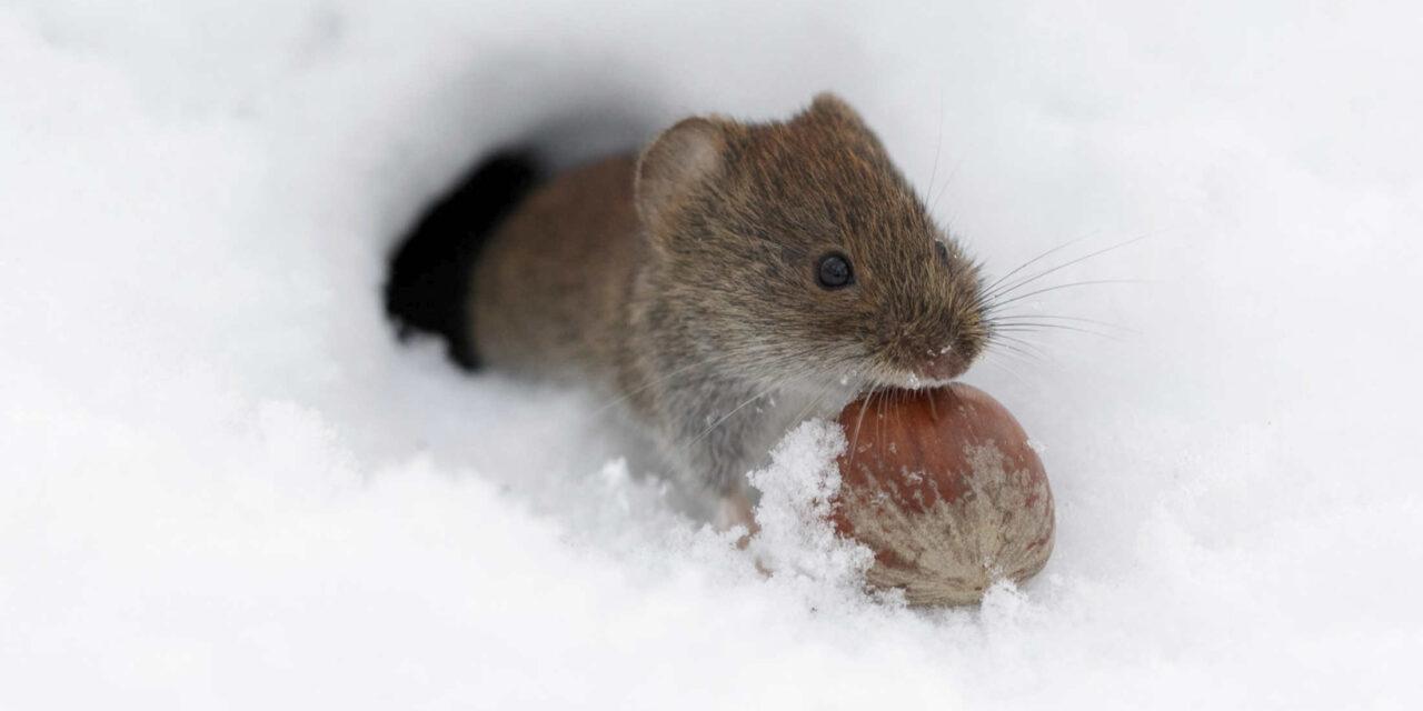 winter! koud! hoe overwinteren dieren?