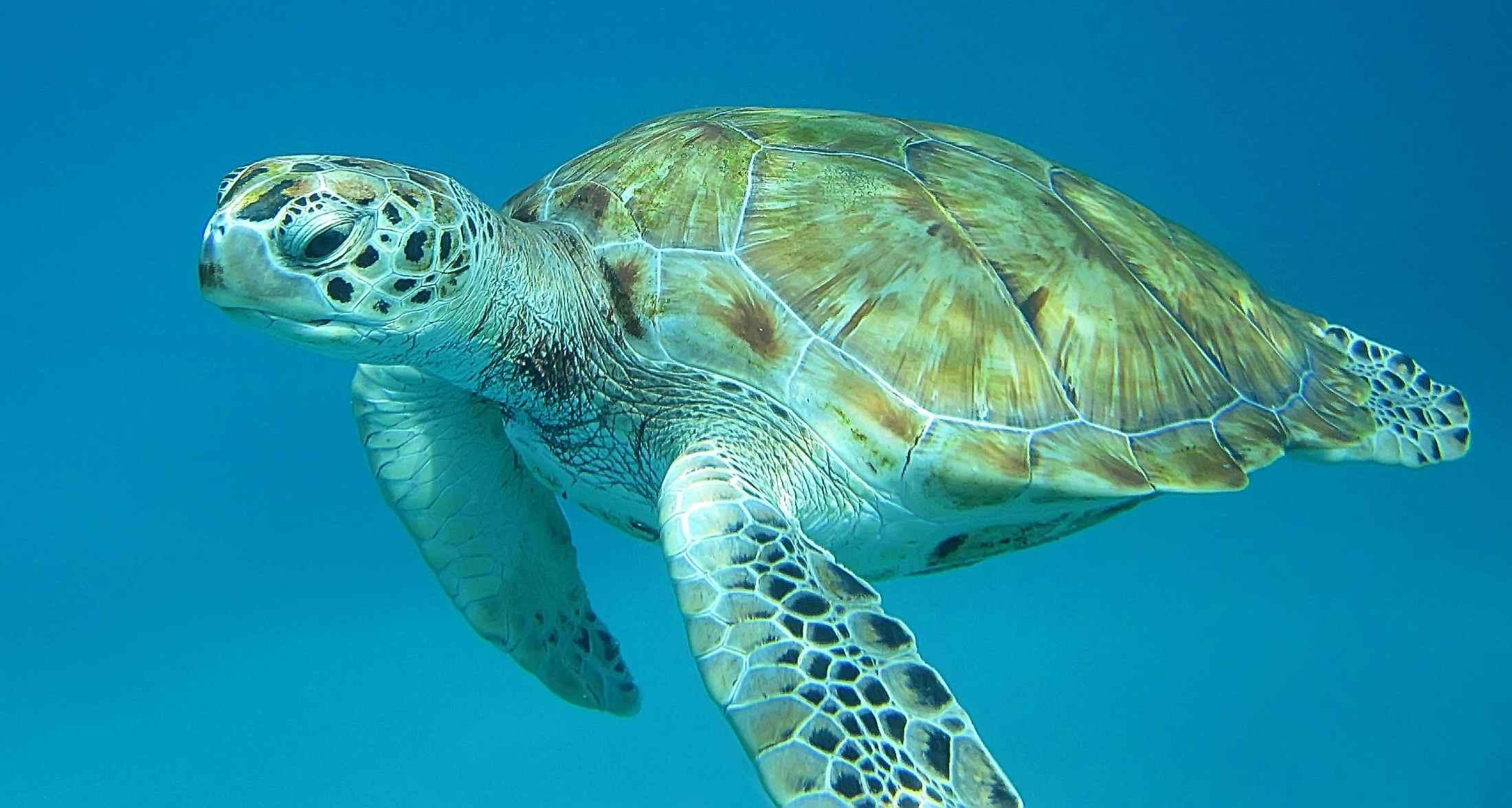 Foto zeeschildpad, Brook Ward