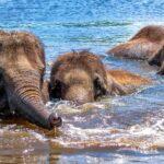 hoe ver zwemmen dieren?