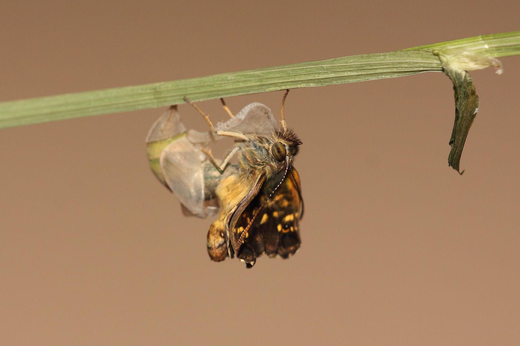 van pop tot vlinder